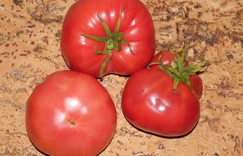 Какую урожайность можно ожидать от томата Медовый в открытом грунте